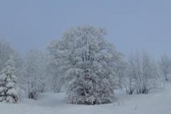 Schneeschuh201405